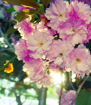 Envie-d'imprimés-fleuris